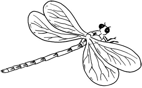 dragonfly template free printable dragonfly coloring pages for