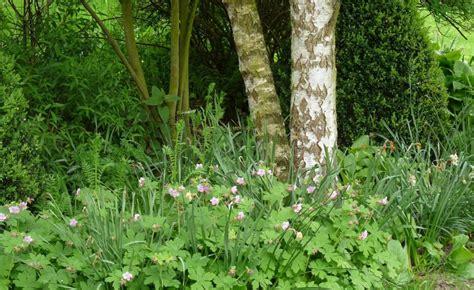Pflanzen Für Schatten Im Garten by Stauden F 252 R Den Trockenen Schatten Stauden Garten