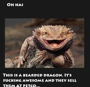 Bearded Dragon Memes - real life snipers and video game snipers by ben meme center