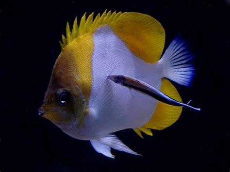 reefkeeping magazine fish profile