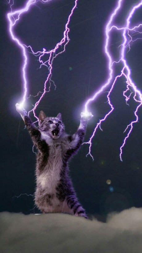 hail  lightning god cat  nice phone wallpaper