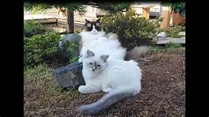 Laid-Back Cat vs Energetic Kitten - YouTube