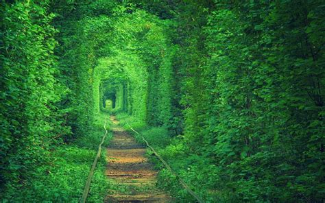 Green Forest Image Desktop by Green Tunnel Path Nature Forest Trees Wallpapers Hd