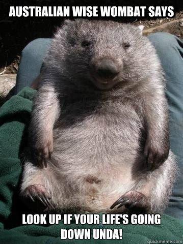 Wombat Memes - australian wise wombat says look up if your life s going down unda australian wise wombat