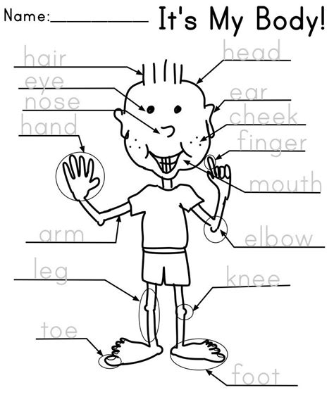 parts of the kindergarten and worksheets