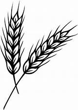Wheat Clipart sketch template