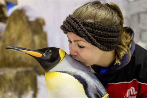 Ski Dubai Penguin Encounter Tickets: Dubai in Dubai   My Guide Dubai