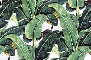 Tropical Palm Leaf Wallpaper - WallpaperSafari