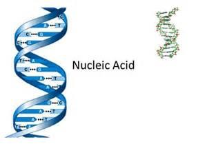 Nucleic Acid Monomer Structure