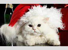 HD Katzen hintergrundbilder HD Hintergrundbilder