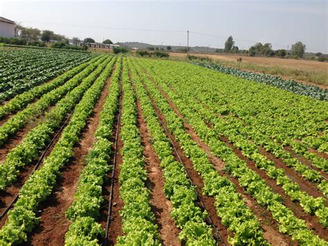 vegetable farm pictures hyderabad curb high usage of pesticides fertilizers in