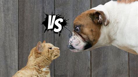 funny cat  dog   winner mkls youtube