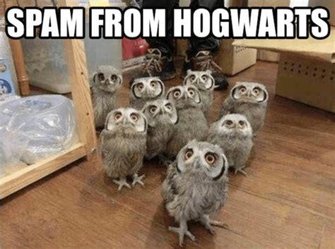 Harry Potter Memes Even Muggles Will Like