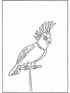Papagei 4 Ausmalbilder Vgel