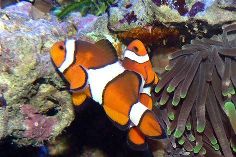 les poissons eau de mer et invert 233 br 233 s eau tortues reptiles et accessoires pour animaux