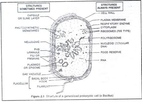 Ultra Structure Prokaryotic Cells