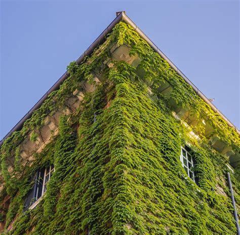 Der Traum Vom Garten by Immobilien Der Geplatzte Traum Vom Vertikalen Garten Welt