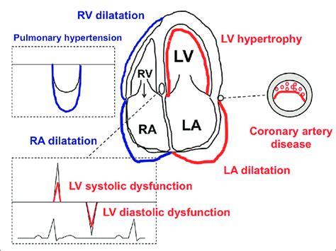 Ecg Cardiac Cycle Diagram For Blood Circulation