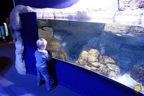 aquarium a visiter en biarritz en famille pays basque avec des enfants voyages et enfants