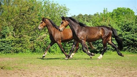 muskelaufbau beim pferd unterstuetzen  gehts