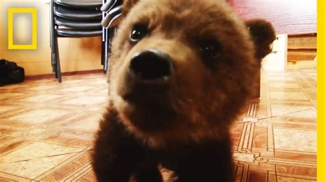Adorable Baby Brown Bear Rescued