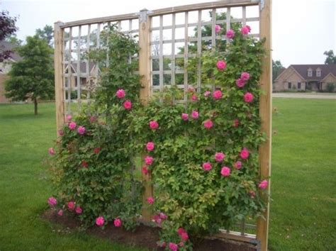 Different Styles For Making Trellis For Climbing Roses