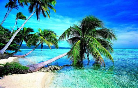 Trees On Beach Most Attractive Wallpapers Hd 4k