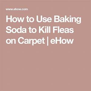 Does baking soda kill fleas in carpet meze blog for How to kill fleas on wood floors