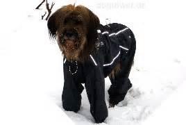 sicherheitsgurt für hunde hurtta outdoor overalls f 227 188 r hunde php fjordifieber