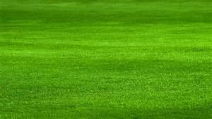 Muss Der Rasen Nach Dem Düngen Gewässert Werden : mit dieser rasenpflege wird der rasen sch n dicht und saftig gr n ~ Yasmunasinghe.com Haus und Dekorationen