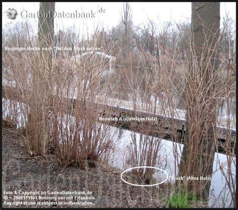 wann pflanzen zurückschneiden bild b 228 ume schneiden baumschnitt obstbaumschnitt heckenschnitt str 228 ucher wann wie
