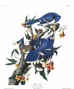 Masturbation Au Volant : audubon oiseau amerique 17 la boite verte ~ Medecine-chirurgie-esthetiques.com Avis de Voitures