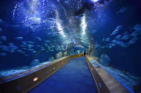 aquarium valence espagne tarif 28 images file valencia l oceanogr 224 fic2 jpg wikimedia