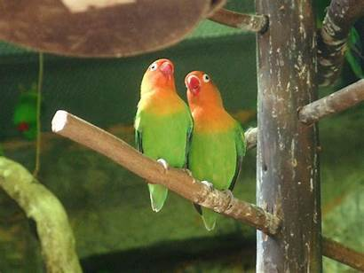 Birds Wallpapers Lovebird Bird Desktop Backgrounds Wallpapercave