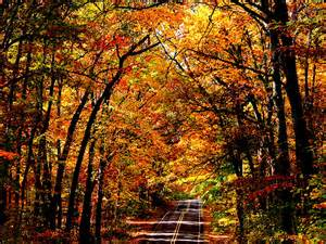 Beautiful Maine Forests