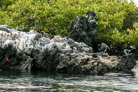 Catamaran Galapagos Islands by Catamarans For Two People To The Galapagos Islands