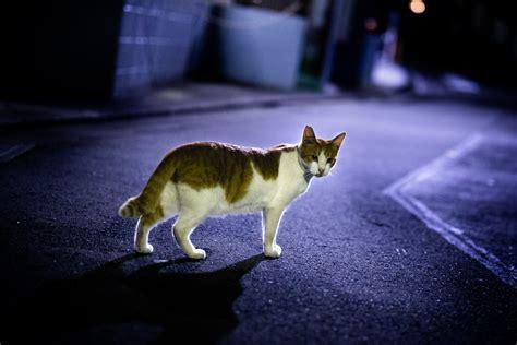 Tokyo Streets-1045 | Ryuugakusei | Flickr