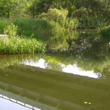 recuperer l eau de pluie pour les toilettes r 233 cup 233 rer filtrer les eaux de pluie mode d emploi terre et jardin