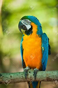 Yellow Blue Parrot | www.pixshark.com - Images Galleries ...