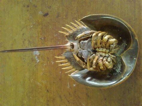 Yupi's biologi : Zoologi Invertebrata