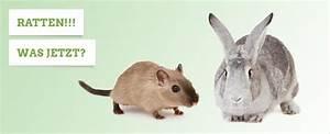 Wie Vertreibt Man Ratten : kaninchen im winter den kaninchenstall winterfest machen ~ Eleganceandgraceweddings.com Haus und Dekorationen