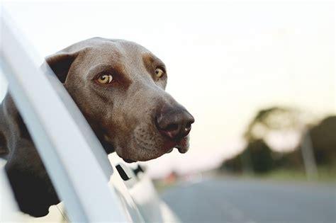versicherungen fuer den hund haustierischde