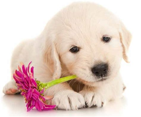 fiori di bach per i cani fiori di bach per aiutare i nostri amici pelosi quattro