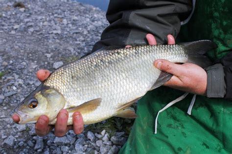 fishing  ireland  anglers guide    fishing