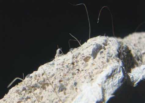 asbestos plaster    asbestos fibers