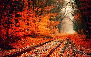 Fall Wallpaper | Nature | Pinterest | Happy fall ...