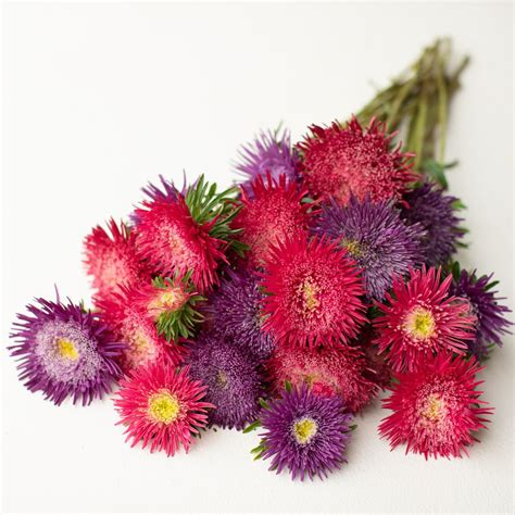 China Aster Berry Sorbet Mix Floret Shop