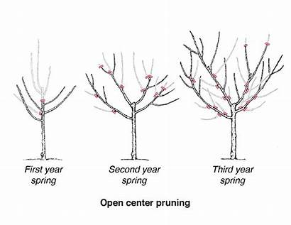 Pruning Trees Fruit Prune Open Tree Apple