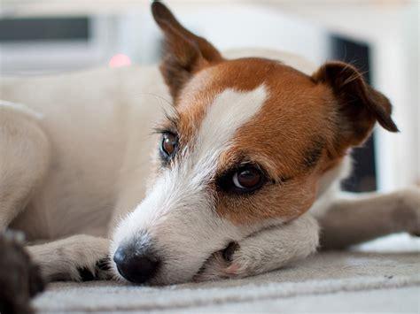 Interesting Dog Facts For Kids On Canine Behavior Top Dog Tips