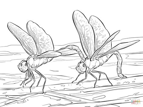 Two Green Darner Dragonflies Coloring Page Free